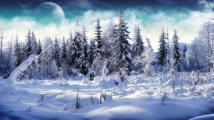 In Snow Background Hd Hd Wallpapers