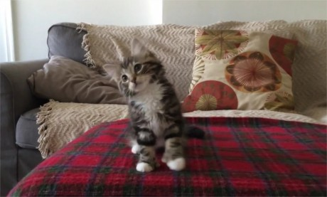 Uptown Kitty Funk Video Adorable Catkitten Dancing To Mark Ronson Bruno Mars Uptown Funk Youtube Mozilla Firefox Uptown Funk