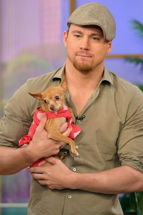 Elle Hot Guys With Puppies Channing Tatum Fashion