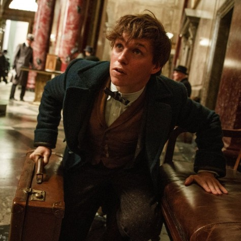 Fantastic Beasts And Where To Find Them Eddie Redmayne Fantastic Beasts And Where To Find Them