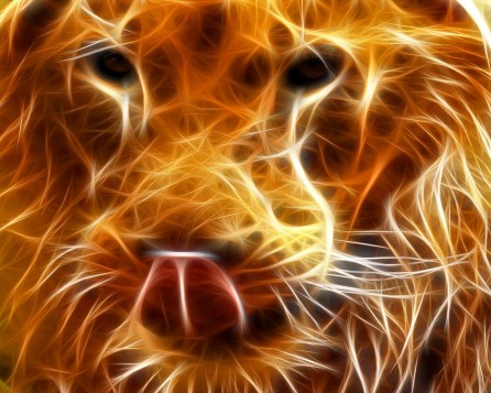 Lion Hd Free Wallpapers