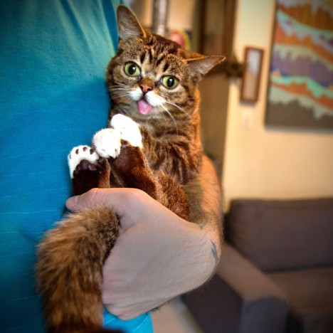 Howtoholdabubsquare Lil Bub