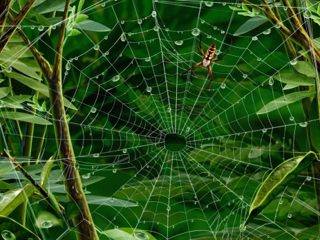 Hires Spiders Web Spiders