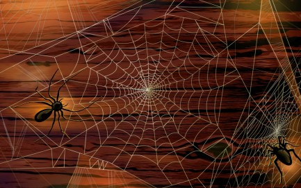 Scary Halloween Spiders Hd Wallpaper Spiders