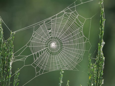 Spiders Web Spiders