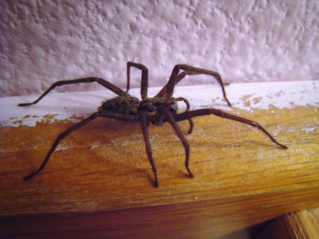 Ways To Expel Spiders From Your Household Spiders