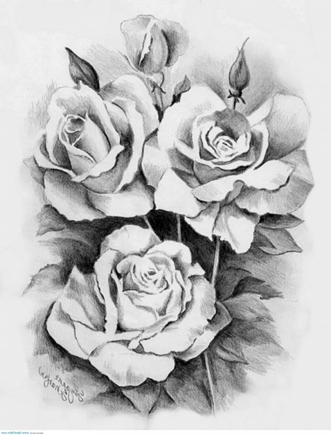 Awesome Black And White Three Roses Tattoo Design Rose